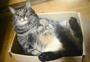 猫ドクター服部幸先生に訊く!「先生、猫の病気を早期発見するコツは?」