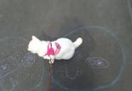 【法律相談】野良猫の糞尿トラブルが、私のせいにされています