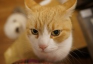 猫マニュアル本には書かれて無い習性。