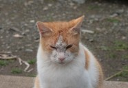ミカンの縄張り主張!巻 可愛いだけじゃニャーイ!のよ、縁側ネコはねっ