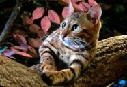 猫の命を考える 悪質ブリーダーとペットオークション