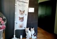 ハンディ猫達のためのシェルター、堂々オープン!~前編~