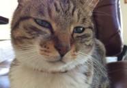 5種類もある猫のヒゲの正式名称を言えますか?