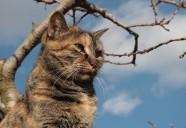 冬の日々の巻 可愛いだけじゃニャーイ!のよ、縁側ネコはねっ