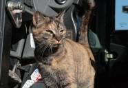 トラさんのお仕事の巻! 可愛いだけじゃニャーイ!のよ、縁側ネコはねっ