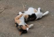 砂浴びの巻! 可愛いだけじゃニャーイ!のよ、縁側ネコはねっ