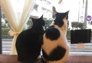 板橋に竣工!SOHO&起業支援、初めての猫との暮らし応援付き一棟丸ごと猫用賃貸!