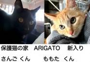 保護猫の家 ARIGATO に猫ちゃんがやってきた!