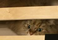 キャットトレーニングの視点から、猫とのより良い暮らしを追求する意識が高まっています