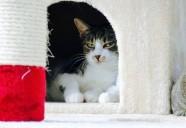猫の肥満はなぜ増えている?