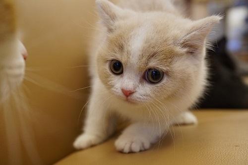 子猫コロン01382