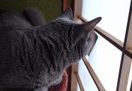 猫のおやつ作り継続のピンチ!?