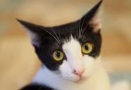 「閉じ込められた猫」 猫という現象 - マンション騒動記⑫ -