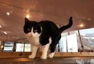 猫カフェもりねこ3周年記念パーティー開催!