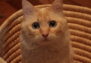 もう1匹いた!黒猫の巻!!!!(特別編) 可愛いだけじゃニャーイ!のよ、縁側ネコはねっ