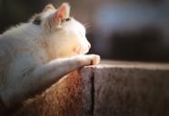 カメラマン南幅俊輔さんの写真展『老師と猫』に行ってきました