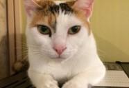 「猫の健康】あなたの愛用している消臭剤や芳香剤は猫に安全ですか?