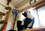 家族になった保護猫たちへの手紙