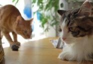 猫の換毛期のブラッシングとブラシ選び