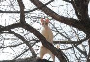 ミカンの木登り!! 可愛いだけじゃニャーイ!のよ、縁側ネコはねっ