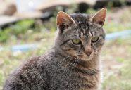 春は狩りの季節の巻!パート3!!可愛いだけじゃニャーイ!のよ、縁側ネコはねっ