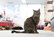 猫との距離の縮め方〜保護猫カフェに行ってみよう〜