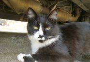 猫救出作戦  ー猫という現象ーマンション騒動記⑬