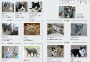 「縁側ネコ一家 ありのまま」を、読んで!の巻!可愛いだけじゃニャーイ!のよ、縁側ネコはねっ