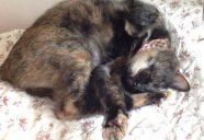 猫の館MEの重役スタッフとスタイリッシュな迷子札