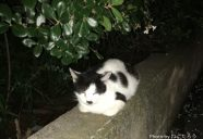 駅前のロータリーにいた汚れた猫は磨いたら美猫になった