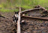 【イベント情報】「鉄道」「猫と鉄道」の2つのコンセプトからなる写真展開催