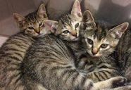 猫の感染症予防について、獣医師がぶっちゃけます! その④