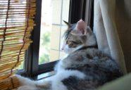 暑い季節の猫のお留守番はここに注意!
