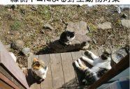 8月20日 縁側ネコの講演の巻!可愛いだけじゃニャーイ!のよ、縁側ネコはねっ