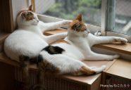 保護猫カフェ「猫式」の平穏を乱す珍客がやってきた