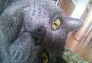 進まぬ猫のおやつ作り② プレハブ珍道中リターンズ