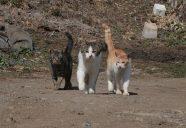 縁側ネコはやはりプライドを作るの新たな学説の巻!可愛いだけじゃニャーイ!のよ、縁側ネコはねっ