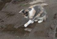 猫蟹合戦!の巻!可愛いだけじゃニャーイ!のよ、縁側ネコはねっ