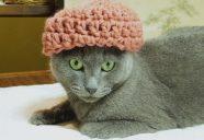 失われた3カ月~ネコのおやつ作りはできるのか?!~