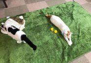 ねこ・ネコ・猫のもりねこカレンダー、発売!