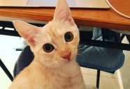 猫本専門 神保町にゃんこ堂ポータルサイトできました!