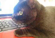 猫と暮らす賃貸住宅を造った理由−黒猫大家#1