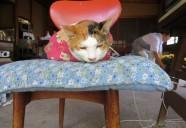 新宿区下落合、薬王院の不愛想なアイドル猫ミーちゃん 東京猫町散歩 弟子編01