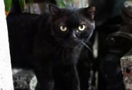 深夜の裏町のブラックキャット|世界のニャ窓から file #3