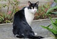新宿区下落合の地域猫はクールで美しい 東京猫町散歩 弟子編02