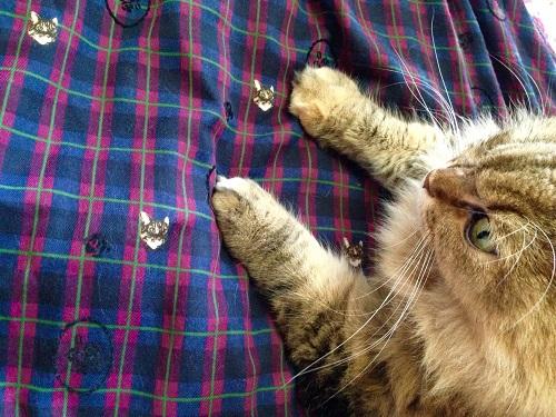 猫とは判りづらい柄