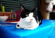 屋台に集まるネコのはなし|世界のニャ窓から file #4
