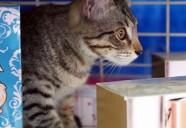 KLの土産物屋の棚に住むネコ|世界のニャ窓から file #5