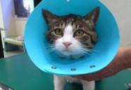 動物病院 猫を飼いはじめるときに必要なこと02