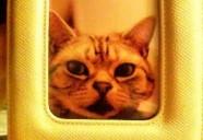 猫のガン『線維肉腫』ってご存知ですか?【1】